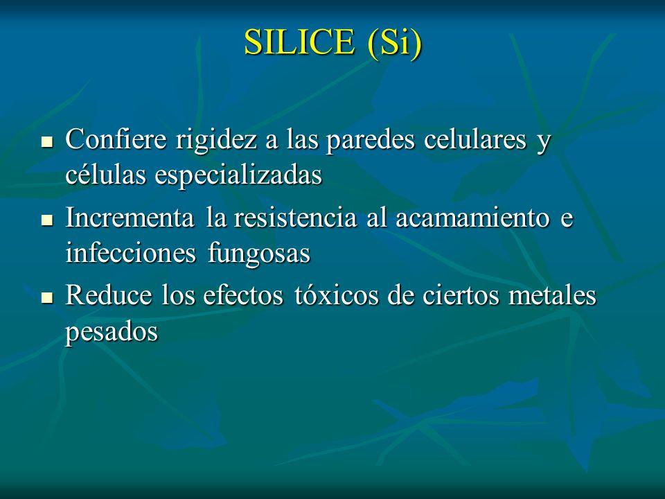 SILICE (Si)Confiere rigidez a las paredes celulares y células especializadas. Incrementa la resistencia al acamamiento e infecciones fungosas.
