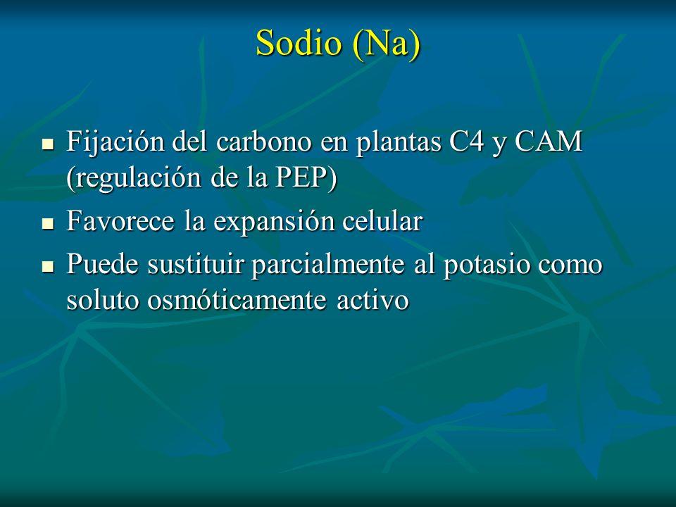 Sodio (Na)Fijación del carbono en plantas C4 y CAM (regulación de la PEP) Favorece la expansión celular.