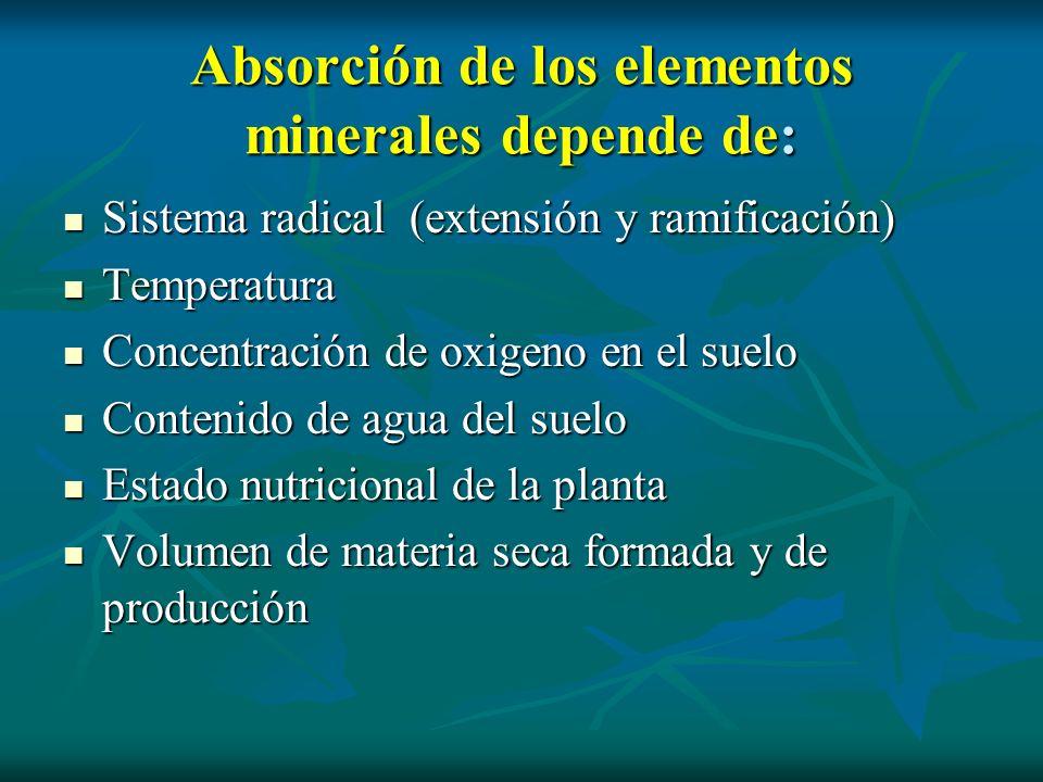 Absorción de los elementos minerales depende de: