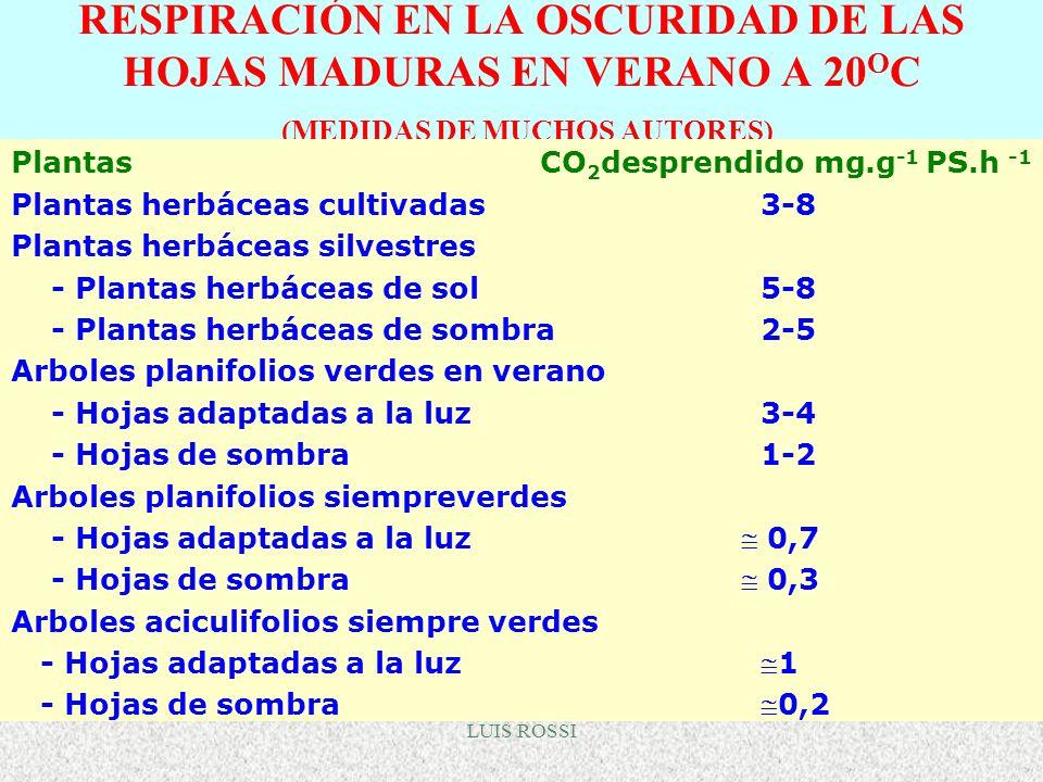 RESPIRACIÓN EN LA OSCURIDAD DE LAS HOJAS MADURAS EN VERANO A 20OC (MEDIDAS DE MUCHOS AUTORES)