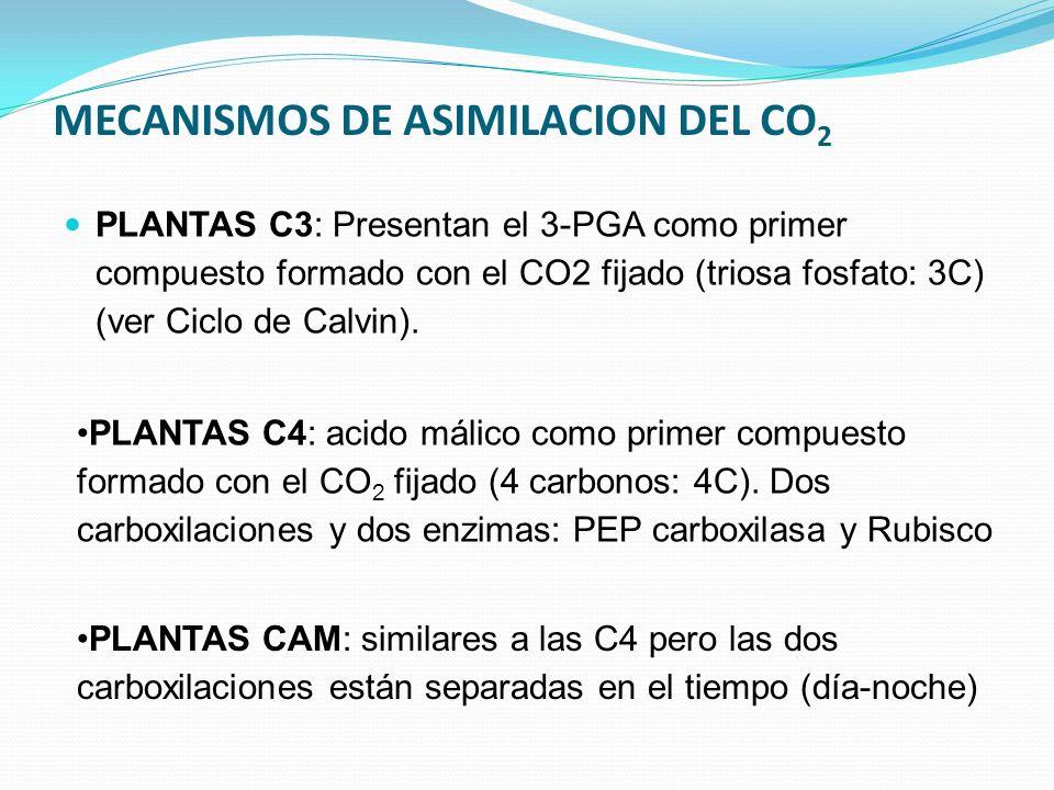 MECANISMOS DE ASIMILACION DEL CO2