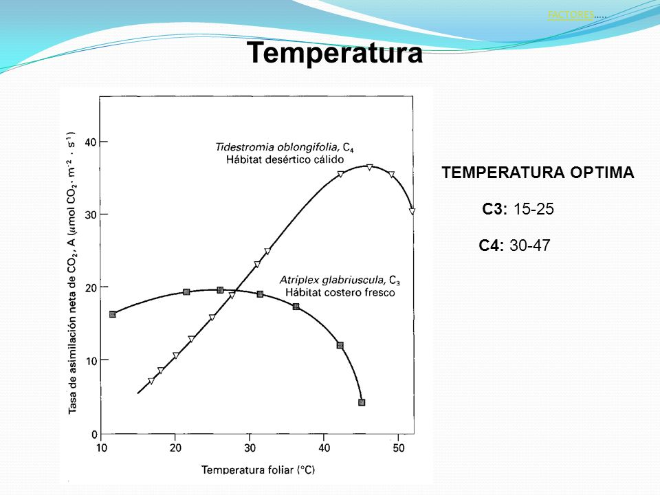 FACTORES….. Temperatura TEMPERATURA OPTIMA C3: 15-25 C4: 30-47