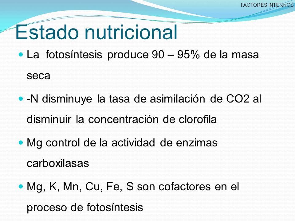 Estado nutricional La fotosíntesis produce 90 – 95% de la masa seca