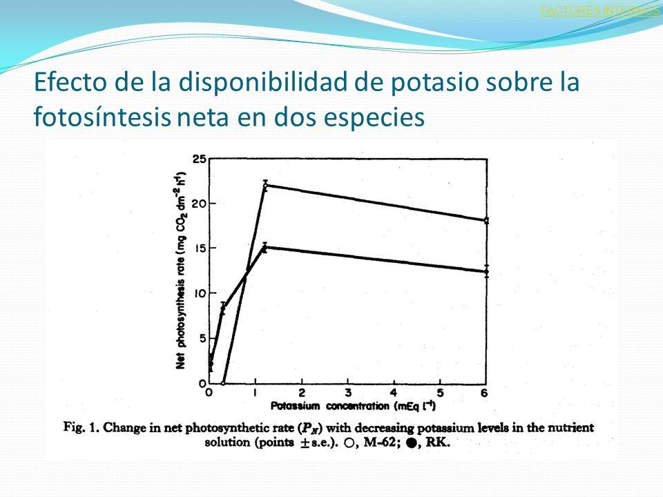 FACTORES INTERNOS Efecto de la disponibilidad de potasio sobre la fotosíntesis neta en dos especies