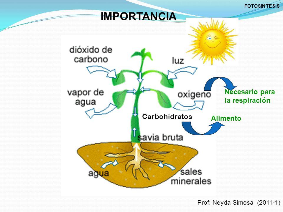 IMPORTANCIA Necesario para la respiración Carbohidratos Alimento