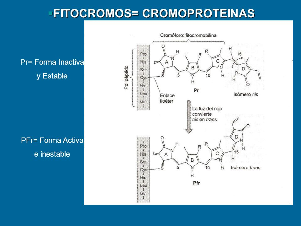 FITOCROMOS= CROMOPROTEINAS