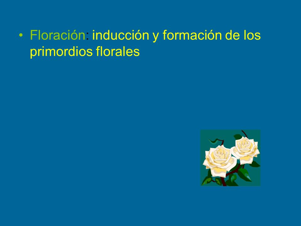 Floración: inducción y formación de los primordios florales