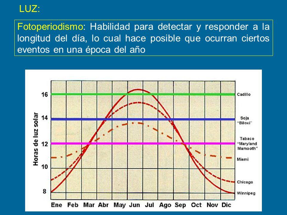 LUZ:Fotoperiodismo: Habilidad para detectar y responder a la longitud del día, lo cual hace posible que ocurran ciertos eventos en una época del año.