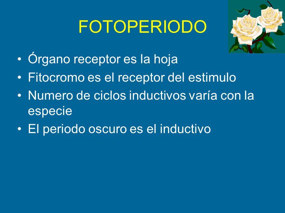 FOTOPERIODO Órgano receptor es la hoja