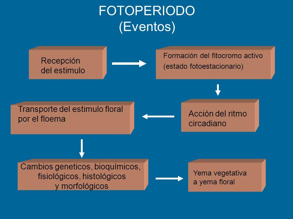 FOTOPERIODO (Eventos)