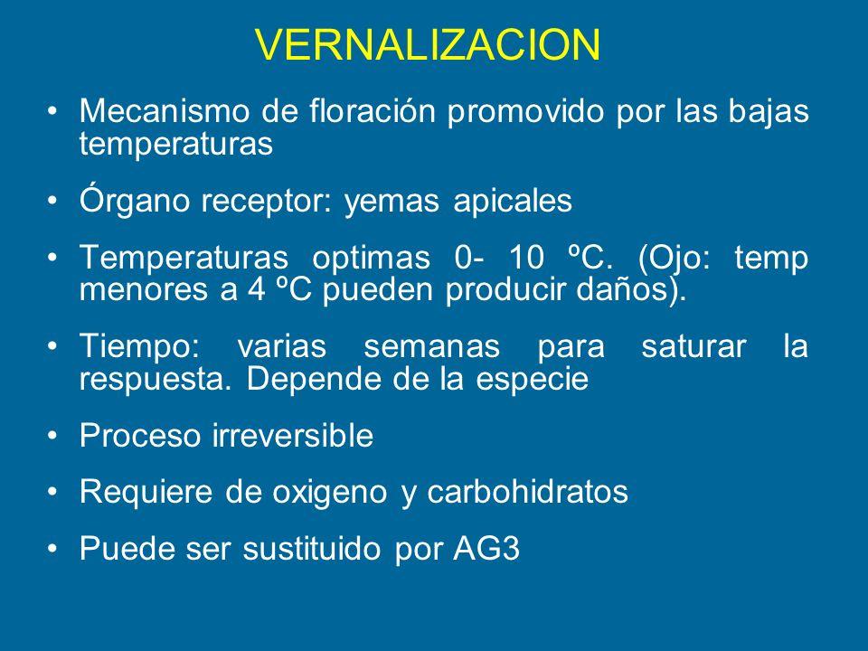 VERNALIZACION Mecanismo de floración promovido por las bajas temperaturas. Órgano receptor: yemas apicales.