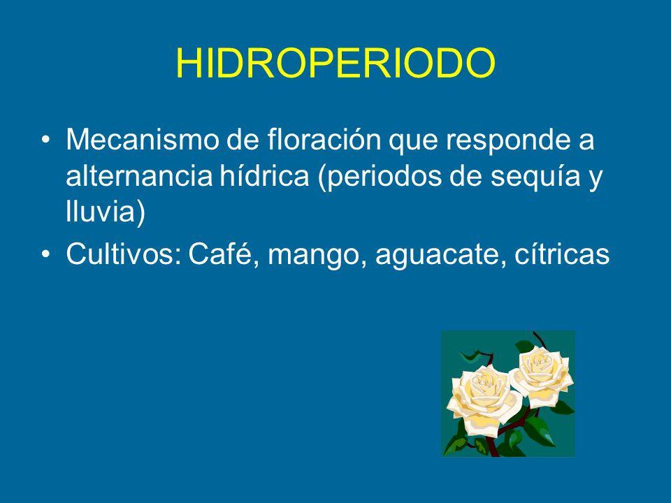 HIDROPERIODO Mecanismo de floración que responde a alternancia hídrica (periodos de sequía y lluvia)