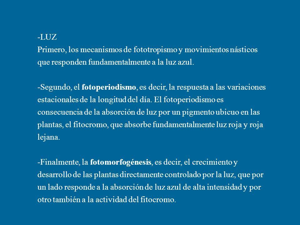 -LUZ Primero, los mecanismos de fototropismo y movimientos násticos que responden fundamentalmente a la luz azul.