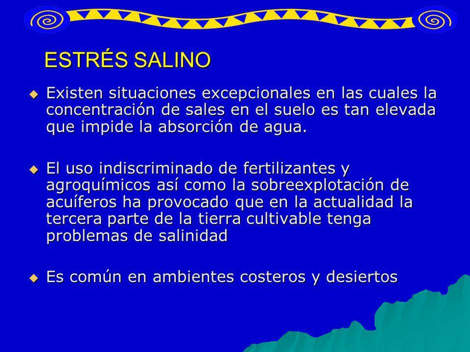 ESTRÉS SALINO Existen situaciones excepcionales en las cuales la concentración de sales en el suelo es tan elevada que impide la absorción de agua.