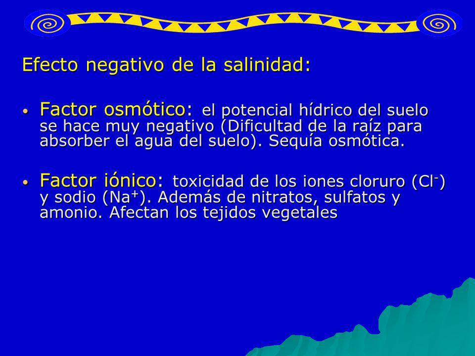 Efecto negativo de la salinidad: