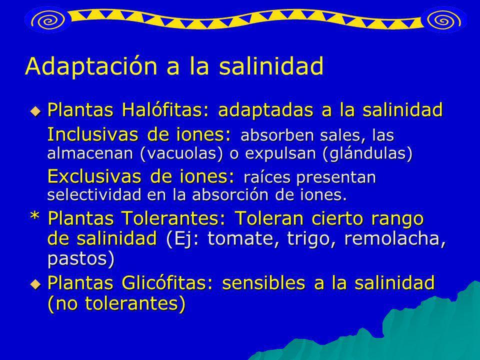 Adaptación a la salinidad