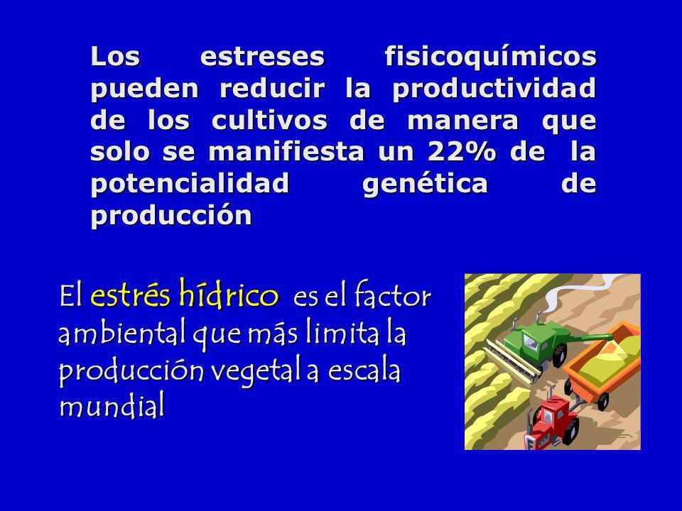 Los estreses fisicoquímicos pueden reducir la productividad de los cultivos de manera que solo se manifiesta un 22% de la potencialidad genética de producción