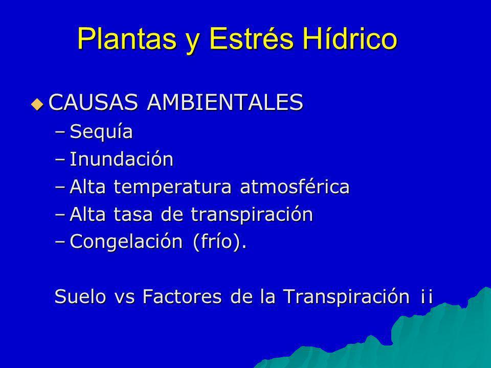 Plantas y Estrés Hídrico