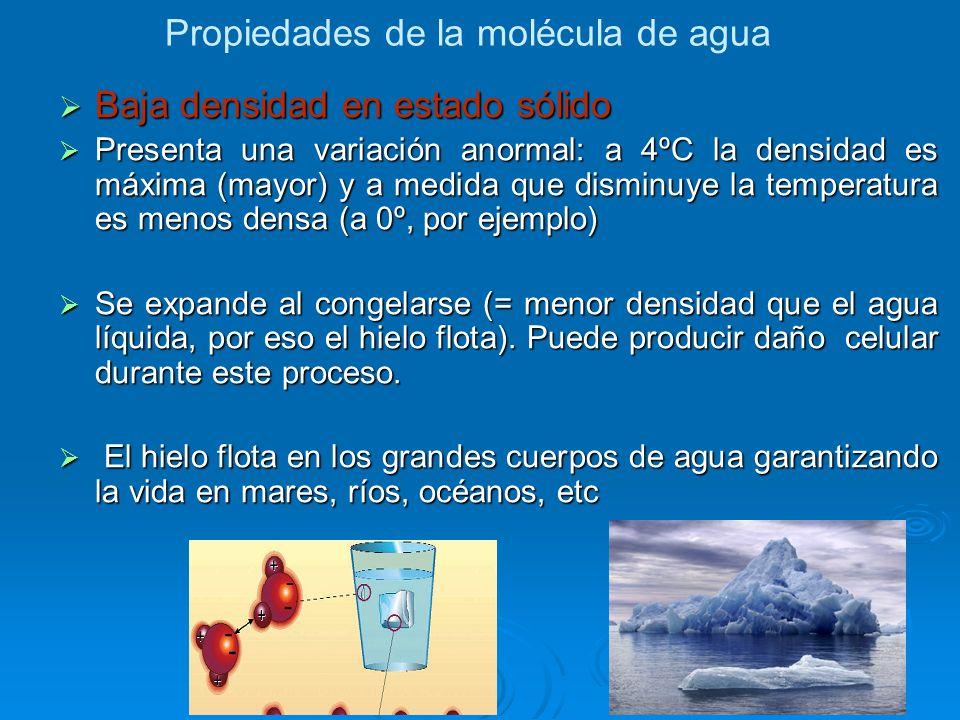 Propiedades de la molécula de agua