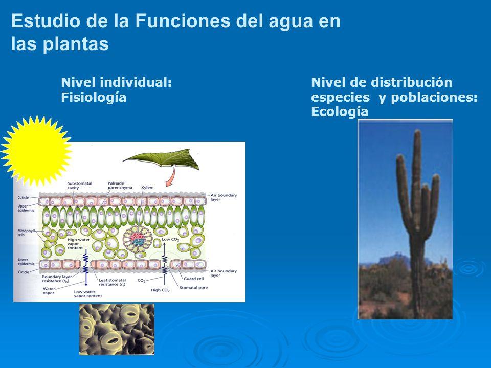 Estudio de la Funciones del agua en las plantas