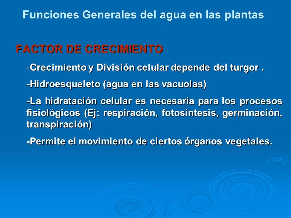 Funciones Generales del agua en las plantas