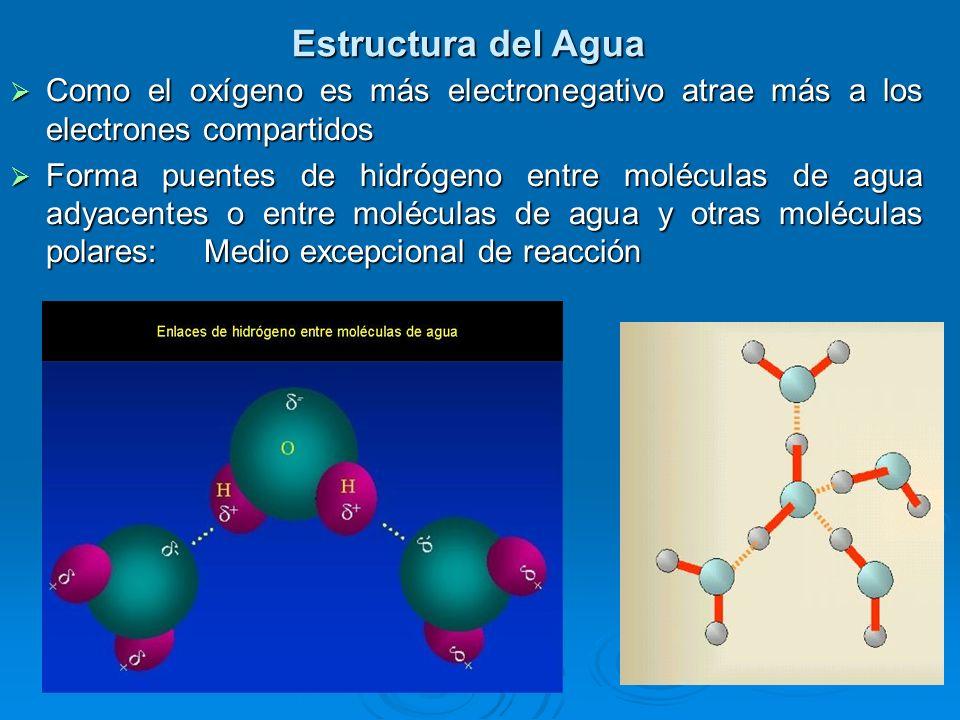 Estructura del Agua Como el oxígeno es más electronegativo atrae más a los electrones compartidos.