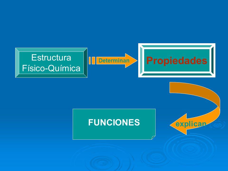 Propiedades Estructura Físico-Química Determinan FUNCIONES explican