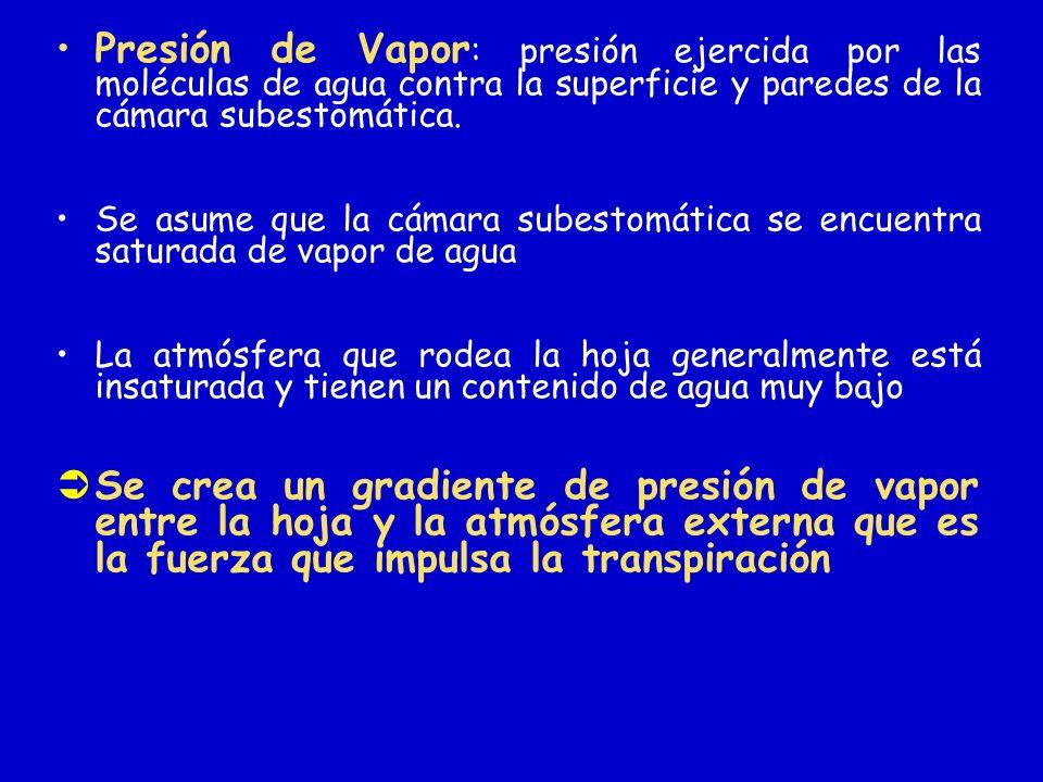 Presión de Vapor: presión ejercida por las moléculas de agua contra la superficie y paredes de la cámara subestomática.