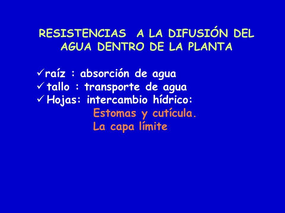 RESISTENCIAS A LA DIFUSIÓN DEL AGUA DENTRO DE LA PLANTA