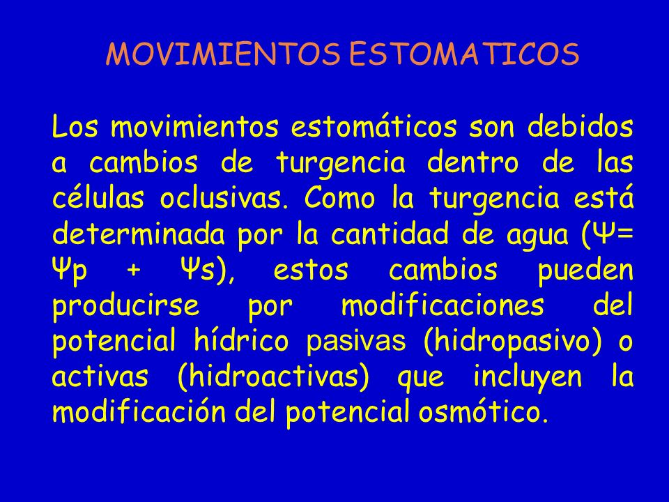 MOVIMIENTOS ESTOMATICOS