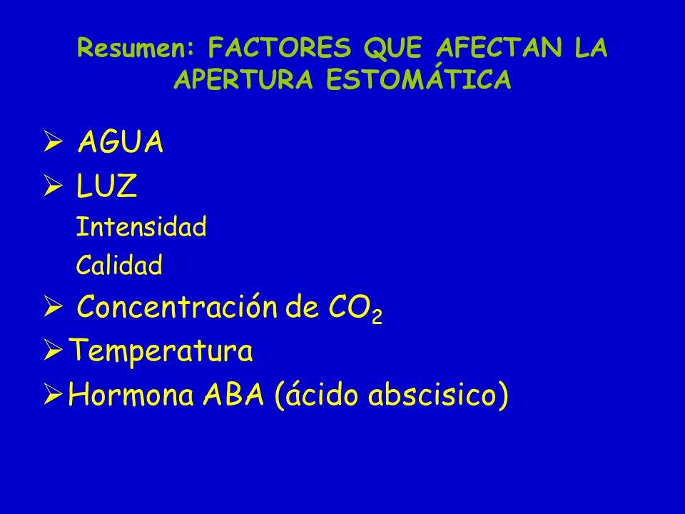Resumen: FACTORES QUE AFECTAN LA APERTURA ESTOMÁTICA