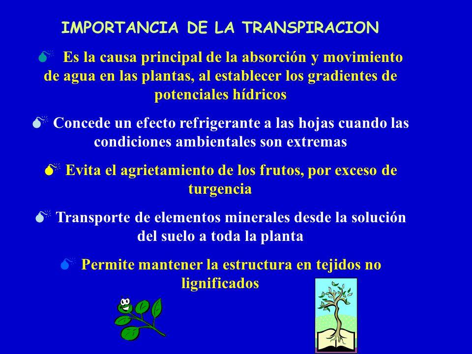 IMPORTANCIA DE LA TRANSPIRACION