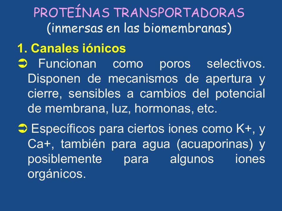 PROTEÍNAS TRANSPORTADORAS (inmersas en las biomembranas)