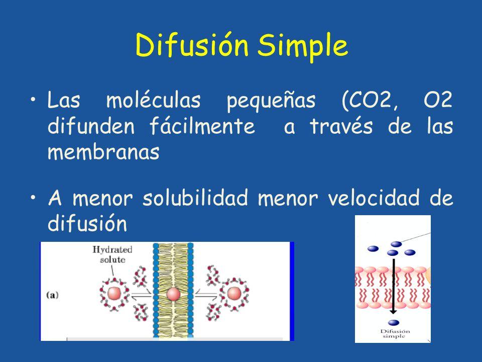 Difusión Simple Las moléculas pequeñas (CO2, O2 difunden fácilmente a través de las membranas.