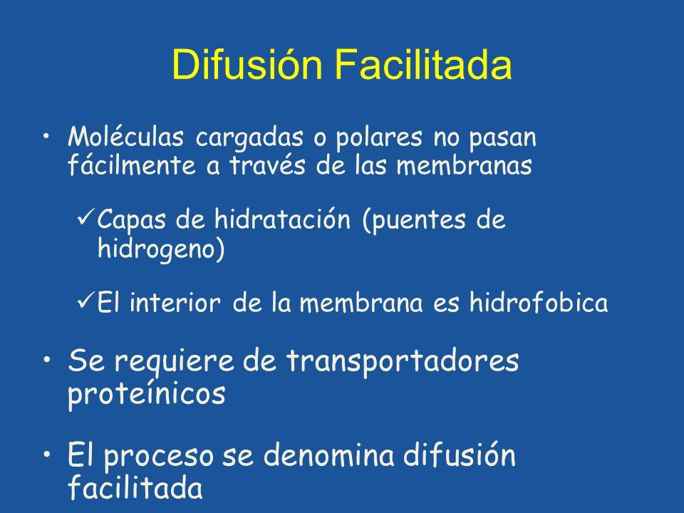 Difusión Facilitada Moléculas cargadas o polares no pasan fácilmente a través de las membranas. Capas de hidratación (puentes de hidrogeno)