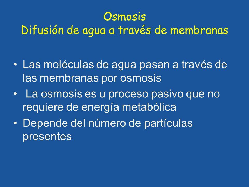 Osmosis Difusión de agua a través de membranas