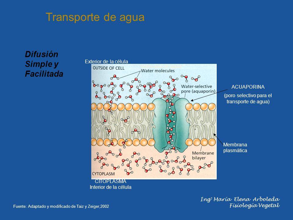 (poro selectivo para el transporte de agua)