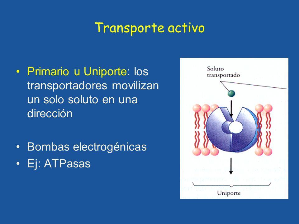 Transporte activo Primario u Uniporte: los transportadores movilizan un solo soluto en una dirección.