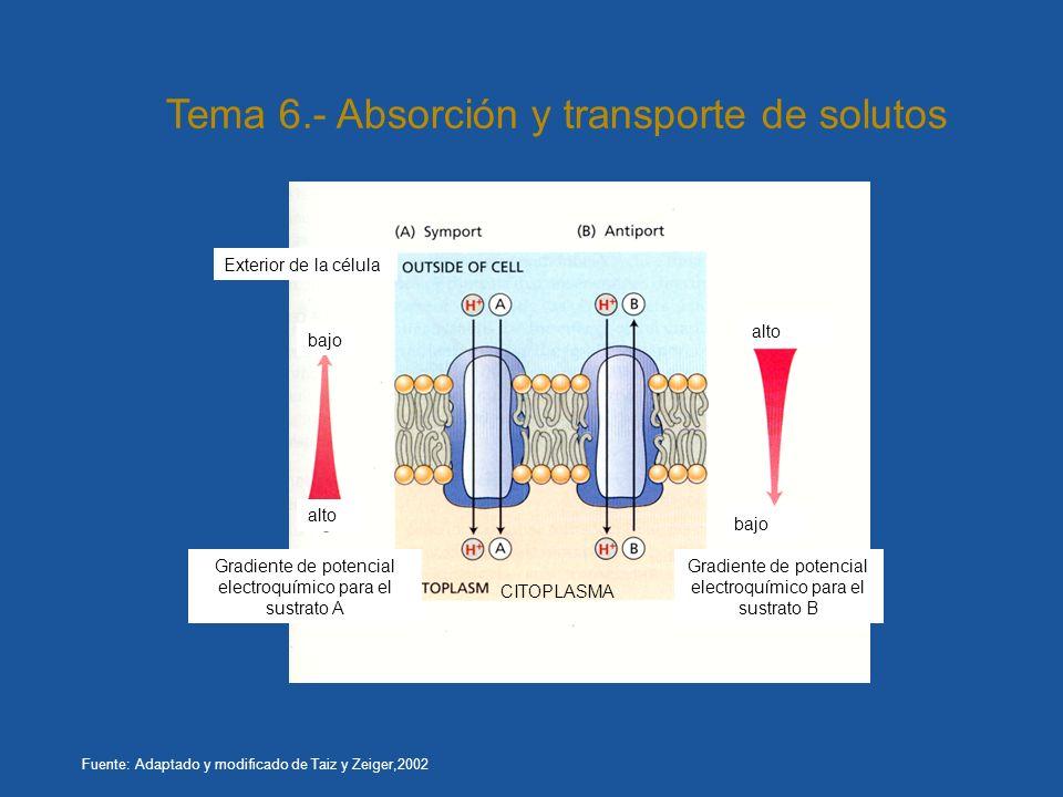 Tema 6.- Absorción y transporte de solutos
