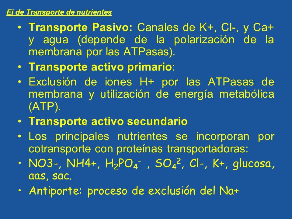 Transporte activo primario: