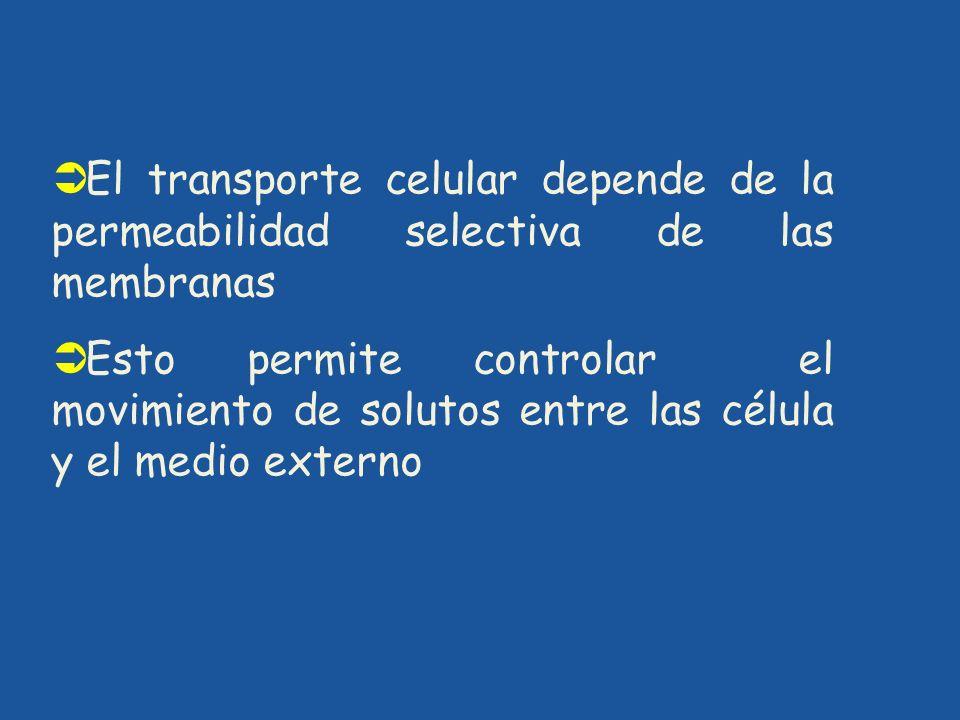 El transporte celular depende de la permeabilidad selectiva de las membranas