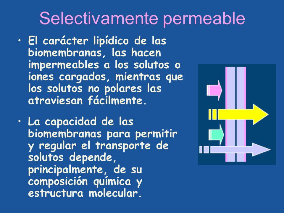 Selectivamente permeable