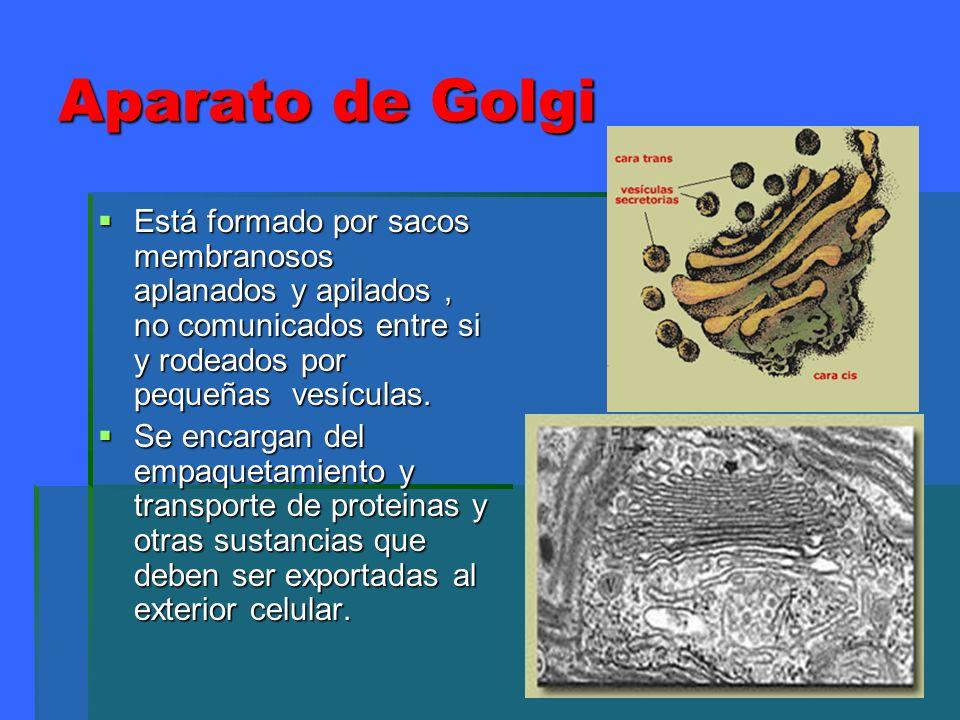 Aparato de GolgiEstá formado por sacos membranosos aplanados y apilados , no comunicados entre si y rodeados por pequeñas vesículas.