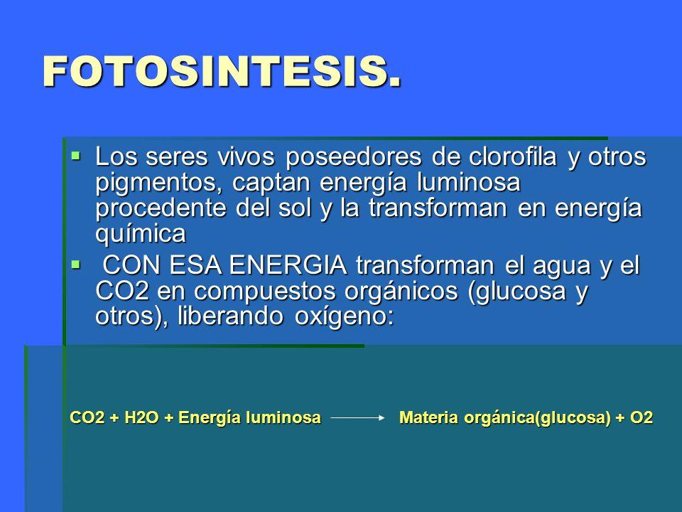 FOTOSINTESIS.