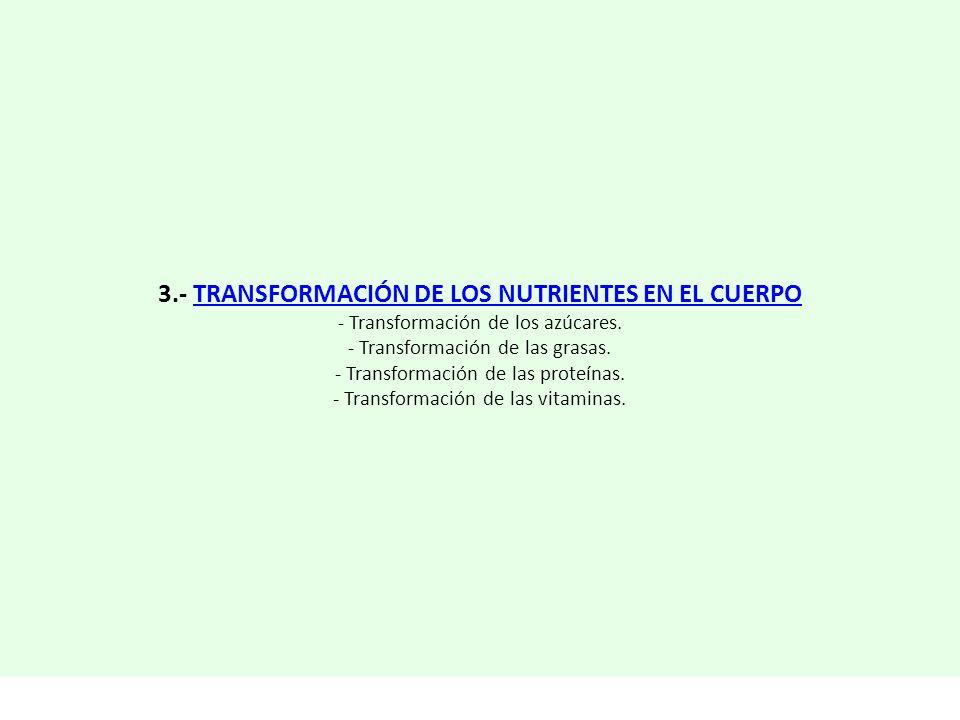 3.- TRANSFORMACIÓN DE LOS NUTRIENTES EN EL CUERPO