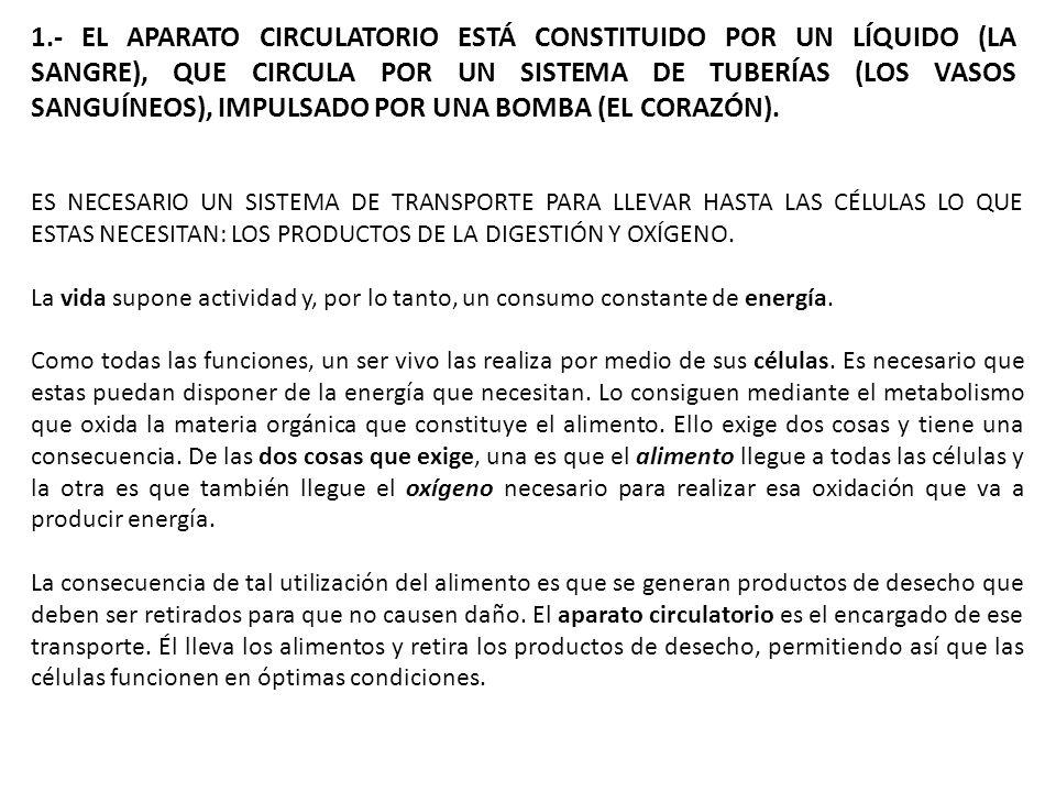 1.- EL APARATO CIRCULATORIO ESTÁ CONSTITUIDO POR UN LÍQUIDO (LA SANGRE), QUE CIRCULA POR UN SISTEMA DE TUBERÍAS (LOS VASOS SANGUÍNEOS), IMPULSADO POR UNA BOMBA (EL CORAZÓN).