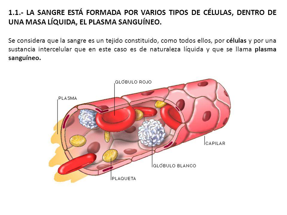 1.1.- LA SANGRE ESTÁ FORMADA POR VARIOS TIPOS DE CÉLULAS, DENTRO DE UNA MASA LÍQUIDA, EL PLASMA SANGUÍNEO.