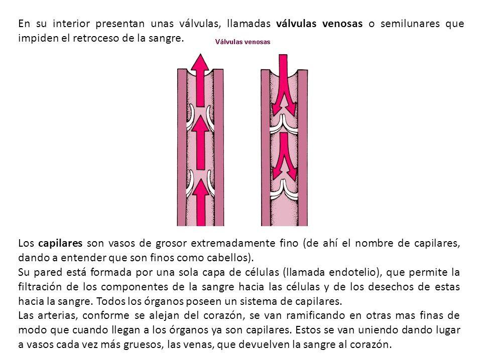 En su interior presentan unas válvulas, llamadas válvulas venosas o semilunares que impiden el retroceso de la sangre.
