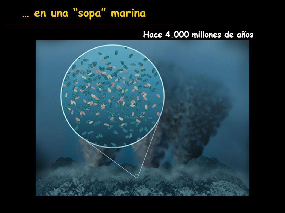 … en una sopa marina Hace 4.000 millones de años