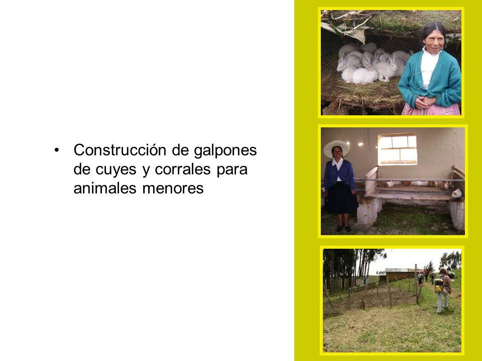 Construcción de galpones de cuyes y corrales para animales menores